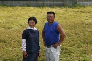 2011稲刈り (19)