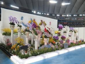 東京ドーム2015 (73)