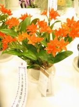 2017年 関東東海花の展覧会 銀賞・日本洋蘭農業協同組合組合長賞受賞