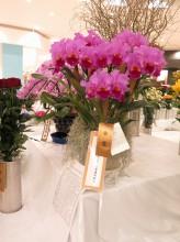 2017年 茨城県花の展覧会 金賞・茨城県花き流通センター農業協同組合理事長賞